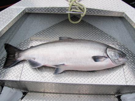 Record Queen Charlotte Lodge Fish