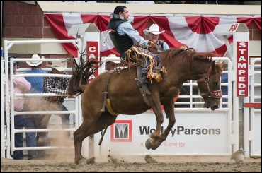 calgary-stampede-rodeo